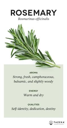 Rosemary Profile | (Source: Aromatherapy For the Healing Spirit - Gabrial Mojay) #Tazeka