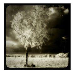 Rabbit, Infrared, Gothic, Silver Halide, metallic photograph, animal print, dark art  - By Myself. $16.00, via Etsy.