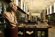 british museum's enlightenment gallery