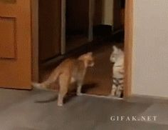 Extra Funny Picture   Click here to watch daily fun : ===>>> http://ift.tt/15UuE5k  fun fun gif funny picture humor joke
