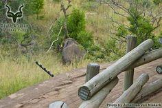KNP - Berg-en-Dal - Dam View South African Holidays, Park, Plants, Parks, Plant, Planets
