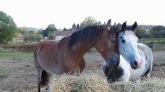 Hugging with her best mare friend Senna ❤️