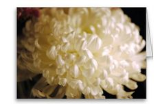 White Chrysanthemum Blank Greeting Cards | Independent Art Gifts By Blooming Vine Design