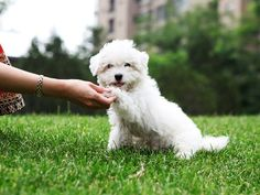 Online Puppy Training Course from Pet Addict - Round Rock / Georgetown: Amazon Local