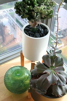 Sabrina Soto's @westelm planters @Apartment Therapy
