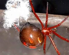 Fear of Wolf Spiders | Most dangerous spiders | Oddities, curious, funny and humor pics