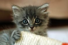 cute pictures - Bing Images