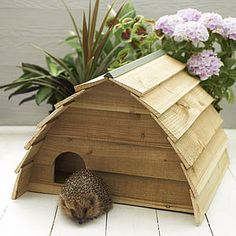 Wooden Hedgehog House - less ordinary garden ideas