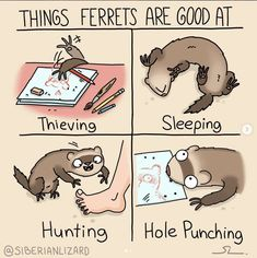 Adorable And Funny Comics About Ferrets That Will Make You LOL - World& largest collection of cat memes and other animals Ferrets Care, Baby Ferrets, Funny Ferrets, Pet Ferret, Ferret Toys, Funny Animal Memes, Cute Funny Animals, Funny Animal Pictures, Cute Baby Animals
