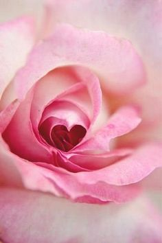 ♥A rose by any other name....