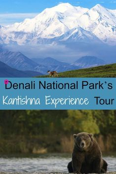Denali National Park's Kantishna Experience Tour #alaskatravel