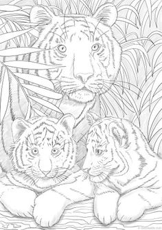 Our tigers are resting. The ideal moment to take your pencils and start working on this printable coloring sheet.