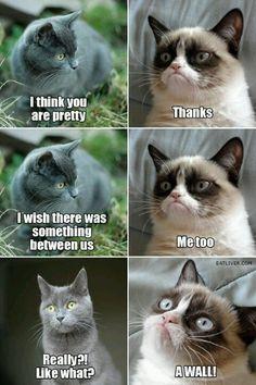Awwwwww grumpy!