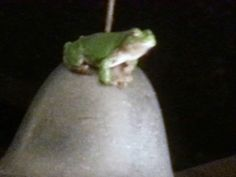 Last year I had you name the frogs living on my deck to win a free pass. But sadly the frogs are not like swallows. Writing Contests, Swallows, Frogs, Street, Swallow, Walkway