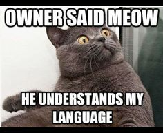 Owner-said-meow-he-understands-my-language.jpg (446×365)