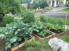 16 Best Terraced Vegetable Garden Images Outdoor Gardens