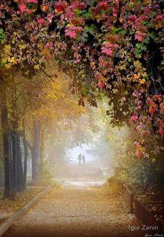 Beautiful Landscape of Nature, Beautiful Autumn Beautiful World, Beautiful Places, Beautiful Pictures, Foto Nature, Autumn Walks, Pathways, Autumn Leaves, Enchanted, Scenery