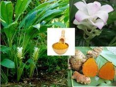 Thai Herbs Health Benefits