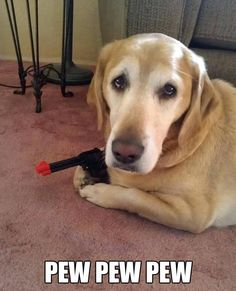 19 Dogs Who Have No Idea What They're Doing Fun Claw - Lustige Katzen, lustige Hunde, lustige Tiere: Lustige Tierbilder mit Bildunterschriften - 21 Humor Animal, Animal Quotes, Animal Memes, Animal Captions, Funny Pics With Captions, Funny Photos, Clever Captions, Funny Cute, The Funny