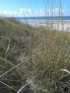 De duinen op Vlieland