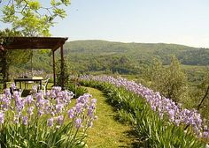 tuscan outdoor dining | tuscany florence firenze florentine hills chianti valdarno tuscany ...