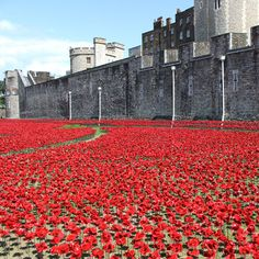 Porcelain poppies surround the Tower of London to commemorate World War I
