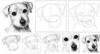 Goede uitleg over het tekenen van een hond