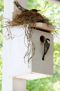 Robin and Chickadee bird house ( nest ) condo. All Birds, Little Birds, Love Birds, Beautiful Birds, Nester, Nest Building, Bird Cages, Bird Nests, Backyard Birds