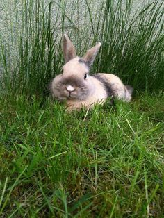 Harlequin bunny in the grass Mais