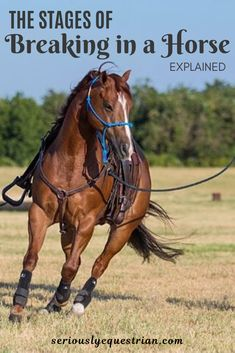 How Long does it take to break in a Horse - Seriously Equestrian Dressage, Reining Horses, Horse Riding Tips, Horse Gear, Trail Riding, Buy A Horse, Horse Love, Horse Training, Training Tips