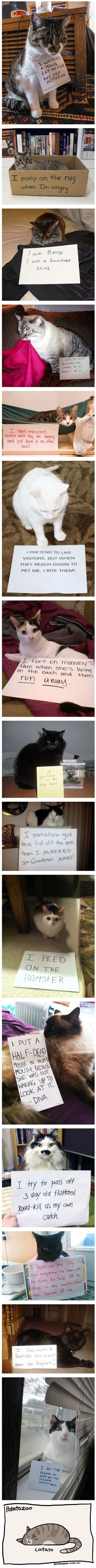 Guilty Cats That Are NOT Sorry - 9GAG This isn't dog Shaming but CAT SHAMING lol had to save it