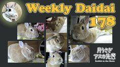 Weekly Daidai 178