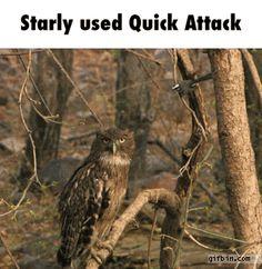 #Starly using quick attack #Pokemon http://www.pokemondungeon.com