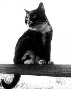 Мотя❣ #кошка #кошки #catstagram #cats #cat #ilovecats #followme #likes #polishgirl #followme #kaliningrad #kld #königsberg #калининград #europe #russia #animal #picture #pet #pets #photography #picoftheday http://tipsrazzi.com/ipost/1521793742280119246/?code=BUef1iGBNPO