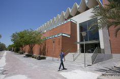 Zonas verdes de la #UMH, alrededor del edificio Altabix en el campus de Elche.