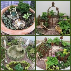 miniature fairy gardens!