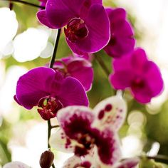 Pretty Orchids // ri