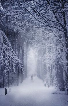The woods are lovely dark and deep, But I have promises to keep, and miles to go before I sleep.