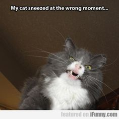 My Cat Sneezed At The Wrong Moment...