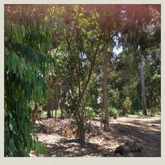 Bosque huaynacapac