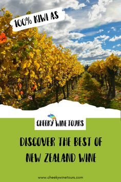 Discover The Best of New Zealand Wine with Cheeky Wine Tours. Come with us and See more, Drink more and Spend less. New Zealand Wine, Fun Days Out, South Island, Fine Wine, Van Life, Wine Tasting, Where To Go, Travel Guide, Tours