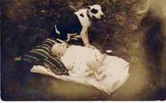 """Old photos of the """"Nanny Dog"""" – Staffordshire Bull Terrier American Pit, American Bullies, Pitbull Pictures, Dog Pictures, Nanny Dog, Staffordshire Bull Terrier, Pit Bull Love, Vintage Dog, Vintage Stuff"""