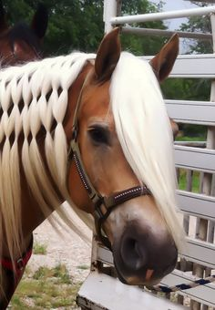 I really want to do this to Bella's mane, and have pink elastics! The pink would show up soooooooo well on her black mane! :)