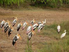 Yala National Park, Sri Lanka #VisitSriLanka