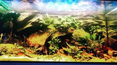 Décor Aqua-Clean (amazonien) Aquariums, Fish Tanks, Freshwater Aquarium, Tanked Aquariums