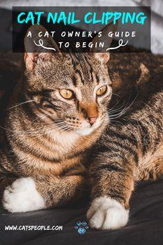 Trim Cat Nails, Cat Water Fountain, Interesting Topics, Cat Dad, Cat Names, Cat Grooming, Cat Health, Get The Job