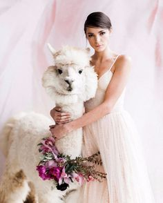 how to have an alpaca at your wedding
