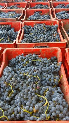 Finita la domenica di raccolta, ora ci si riposa. Buona #vendemmia a tutti! #vino #Puglia #buonaserata