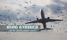 Cât de periculos devine zborul atunci când avionul în care te afli lovește o pasăre, ori un stol? Cât de dese sunt bird strike -urile în România?