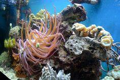 amazing underwater life